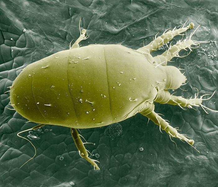 профилактика от паразитов в организме ребенка