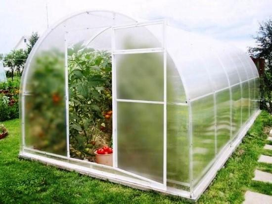 выращивание-рассады-в-теплице