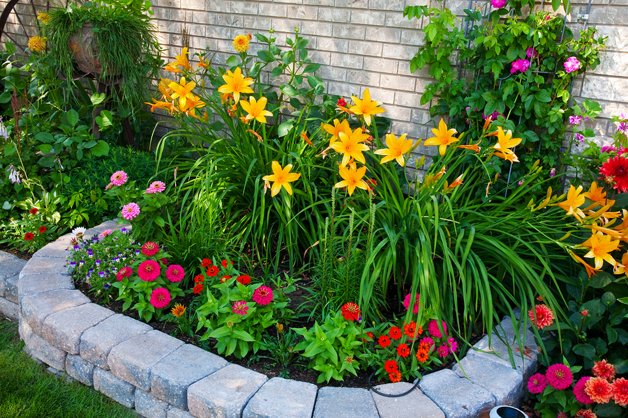 Colorful_Flower_Bed