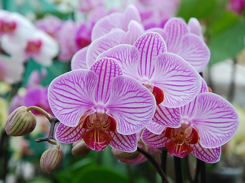 Цветы в горшках название и 23