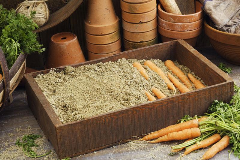 Как хранить морковь в погребе зимой?