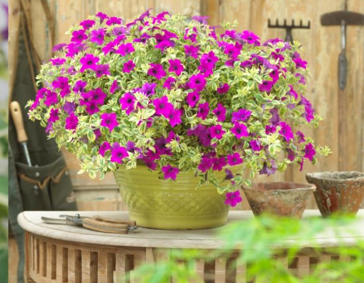 Цветы комнатные тенелюбивые неприхотливые