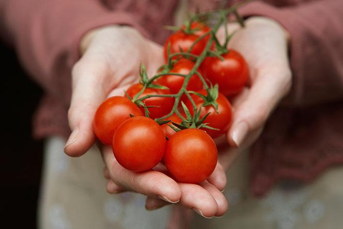 istoriya-tomatov
