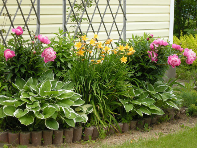 Многолетние цветы в саду фото и названия
