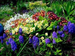 весенние-цветы