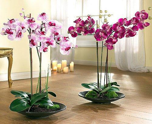1356694074_kak-vyrastit-orhidei-na-svoem-podokonnike-1