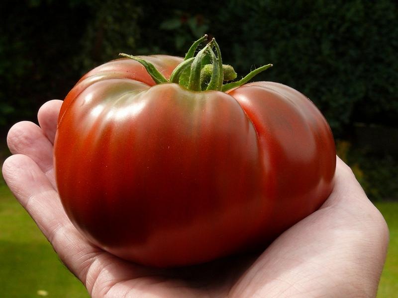 pomidor-dlya-tepliczyi 3