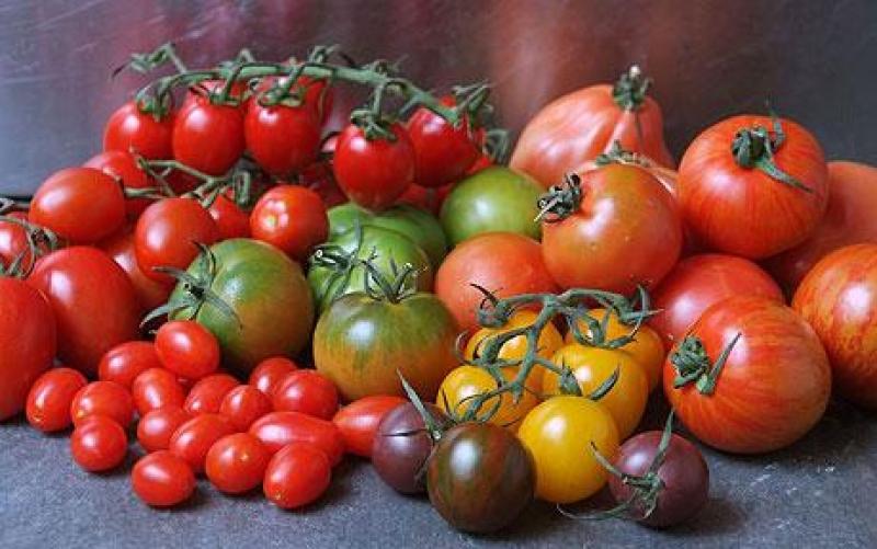 sorta-tomatov-dlya-teplitsy