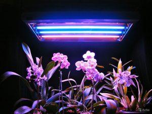 Svetodiodnye-svetilniki-dlya-osveshheniya-teplits