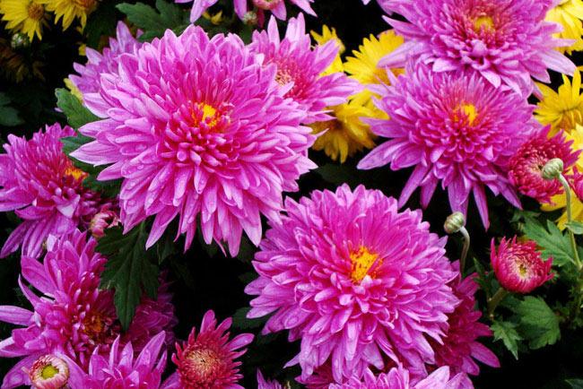 Когда можно сажать цветы под зиму