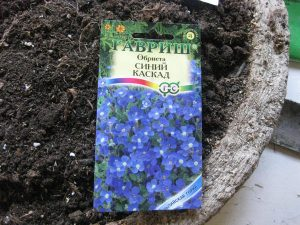 обриета-семена