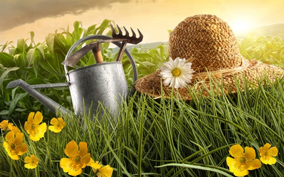 Астильба из семян в домашних условиях: подготовка 89