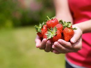Как ухаживать за клубникой весной, чтобы был хороший урожай?