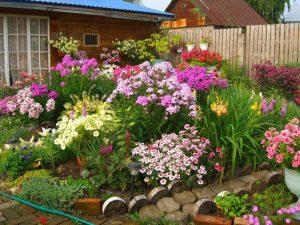 Цветы для клумбы, цветущие все лето. Фото и название
