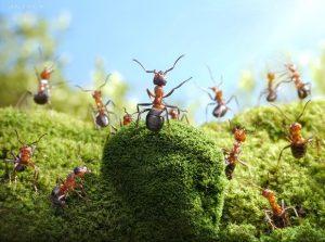 как избавиться от муравьёв в огороде навсегда народными средствами
