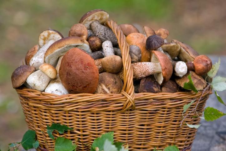Фото съедобных и несъедобных грибов с названиями