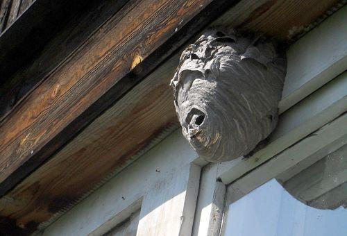 как избавиться от осиного гнезда на даче