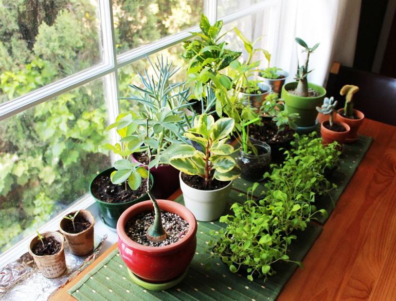 Почему в доме не растут цветы приметы