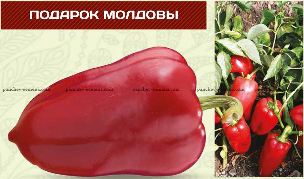 Фото сорта перца подарок молдовы