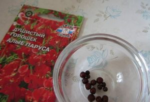 semena_goroshek