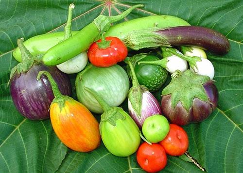 dlinnye-kruglye-ovalnye-plody