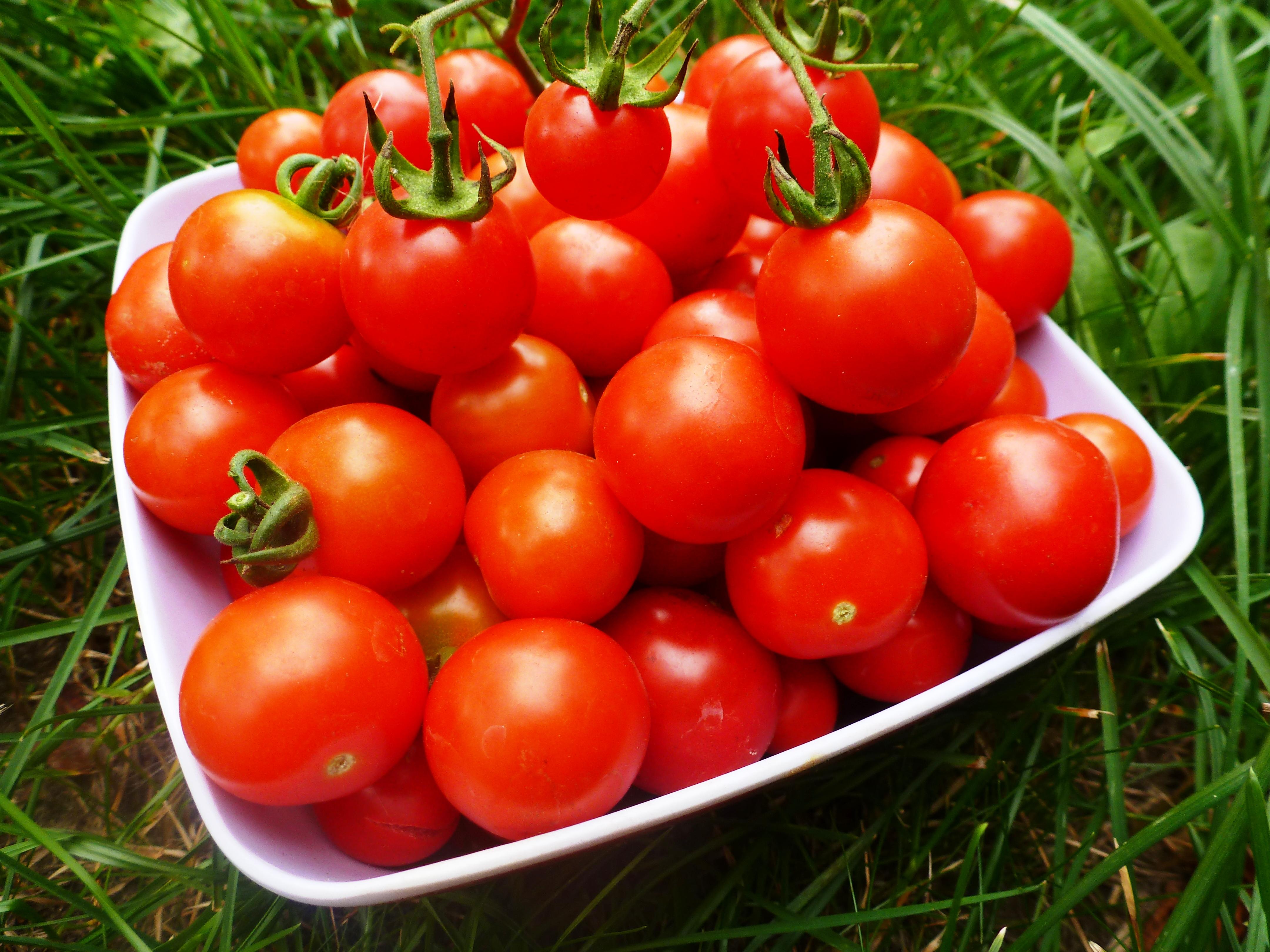 Как в домашних условиях выращивать помидоры-черри