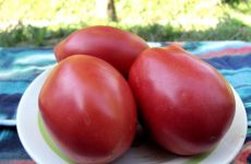 томат розовый фламинго характеристика и описание сорта