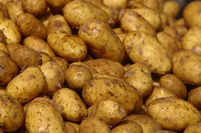 картофель скарб описание сорта фото отзывы