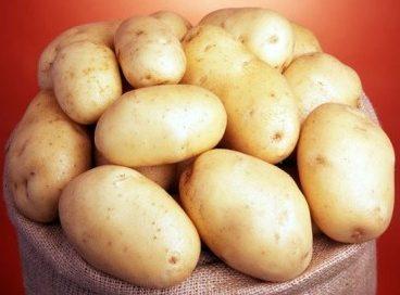 картофель королева анна описание сорта фото отзывы