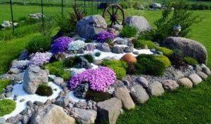 цветы для альпийских горок: многолетние, фото с названиями