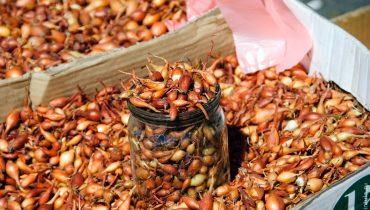 чем обработать лук севок перед посадкой от болезней и вредителей