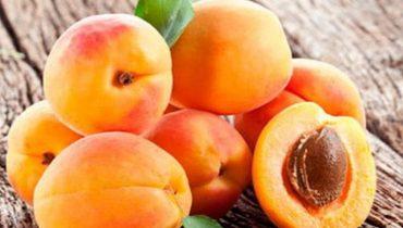 лучшие сорта абрикос для Подмосковья