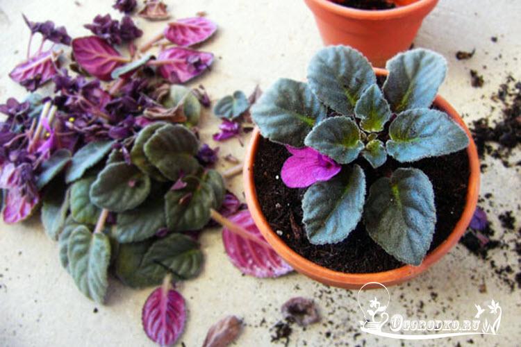 Приметы домашние цветы 25