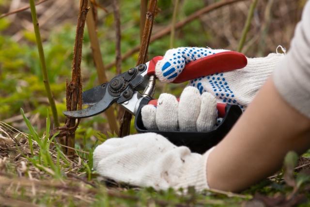 как обрезать малину осенью чтобы был хороший урожай