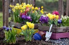 какие цветы сажают осенью на даче для цветения весной и летом