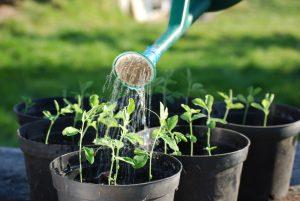 Когда сажать баклажаны на рассаду в 2018 году по лунному календарю в зависимости от региона?