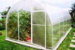 Миниатюра к статье Подкормка помидор в теплице: когда и чем удобрять?