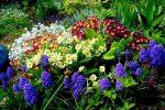 Миниатюра к статье Многолетние цветы, цветущие все лето
