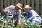 Миниатюра к статье Лунный посевной календарь садовода и огородника на май [year] года