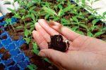 Миниатюра к статье Когда сажать перец на рассаду в [year] году