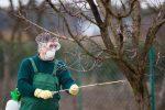 Миниатюра к статье Обработка сада осенью от вредителей и болезней