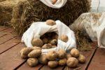 Миниатюра к статье Облегчите свой труд — посадите картофель под солому