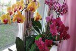 Миниатюра к статье Как ухаживать за орхидеями в домашних условиях?