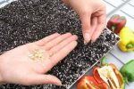 Миниатюра к статье Подготовка семян перца к посеву на рассаду