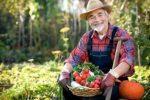 Миниатюра к статье Календарь садовода-огородника на [year] года для Подмосковья
