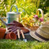 Миниатюра к статье Лунный календарь на июнь 2017 года, садовода и огородника