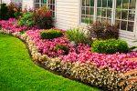 Миниатюра к статье Цветы многолетники для сада, неприхотливые, долгоцветущие