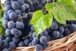 Миниатюра к статье Вкусный виноград для средней полосы России — реальность