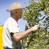Миниатюра к статье Препарат «Профилактин» — качественная ли профилактика для сада?