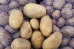 Миниатюра к статье Картофель «Бриз» — описание и характеристика